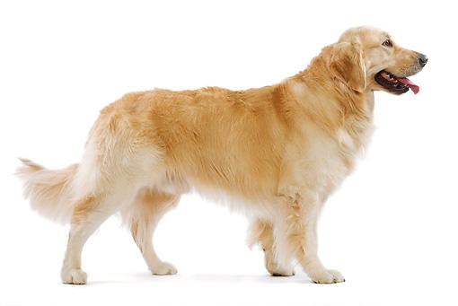 DOG-03-JE0003-01P